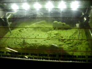 Processo lavorativo olio oliva tesoridelsole gramolazione