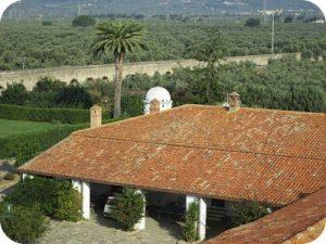 Azienda agricola de lorenzo produzione olio extra vergine di oliva